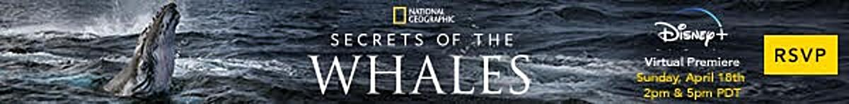 Secrets of the Whales | National Geographic